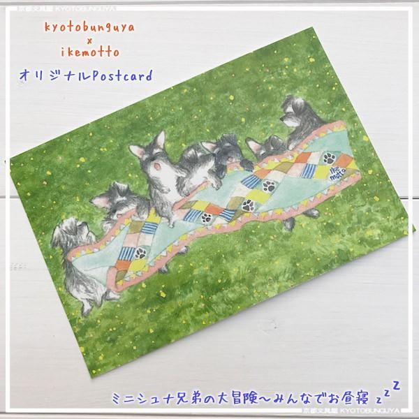 ポストカード〈オリジナルデザイン〉 ミニシュナ兄弟の大冒険〈ミニチュアシュナウザー〉 kyoto-bunguya