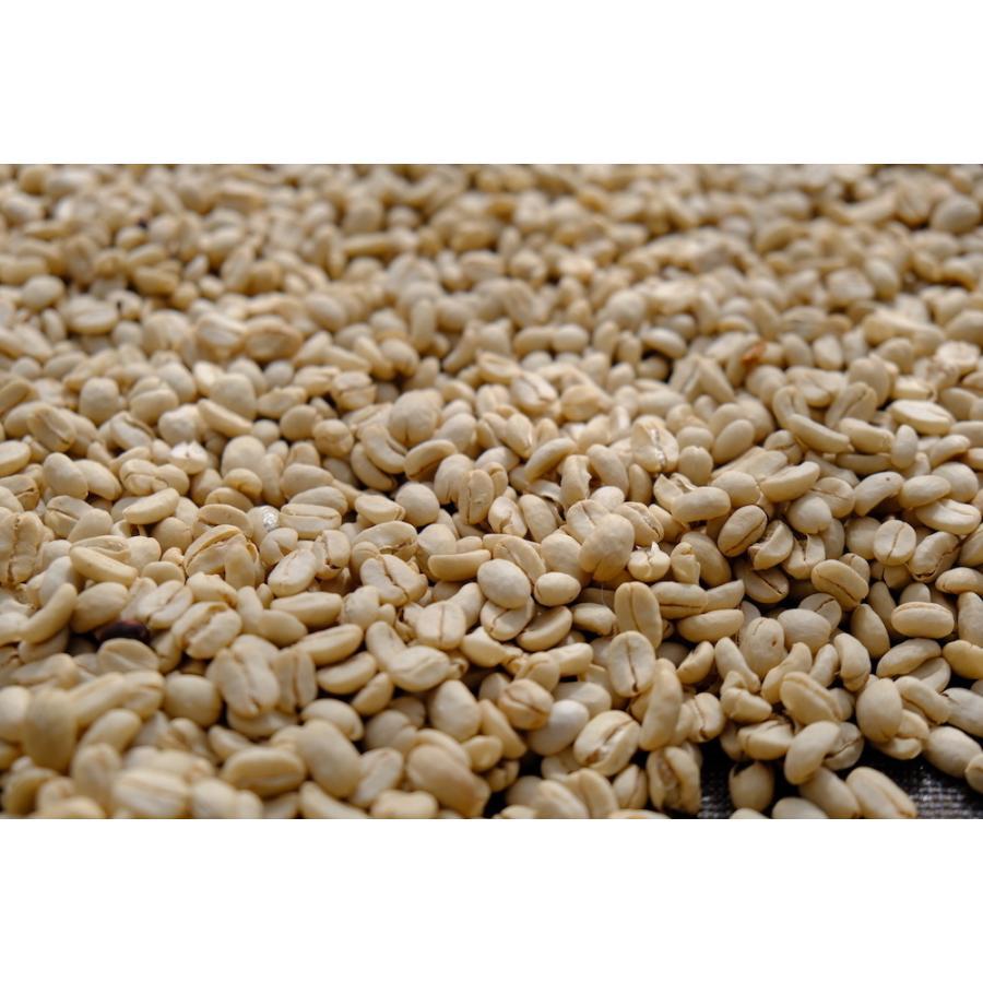 コーヒー豆 コーヒー 珈琲 250g  コロンビア ラ・ファルダ kyoto-coffee 04