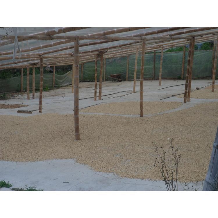 コーヒー豆 コーヒー 珈琲 250g  デカフェ-カフェインレス-  コロンビア サンアグスティン kyoto-coffee 05