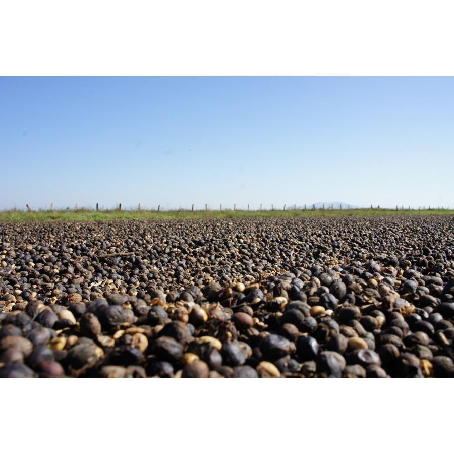コーヒー生豆 コーヒー 珈琲 1kg ブラジル モンテアレグレ パルプドナチュラル|kyoto-coffee|06