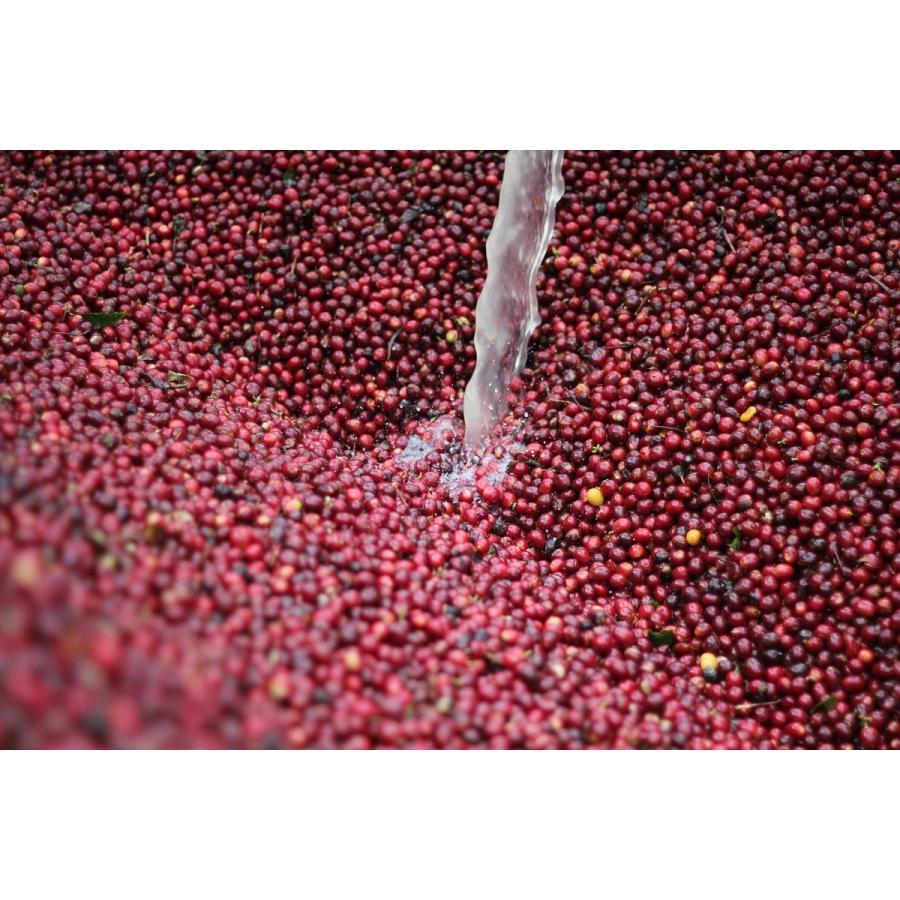 コーヒー豆 コーヒー 珈琲  100g グアテマラ エルソコッロ |kyoto-coffee|03