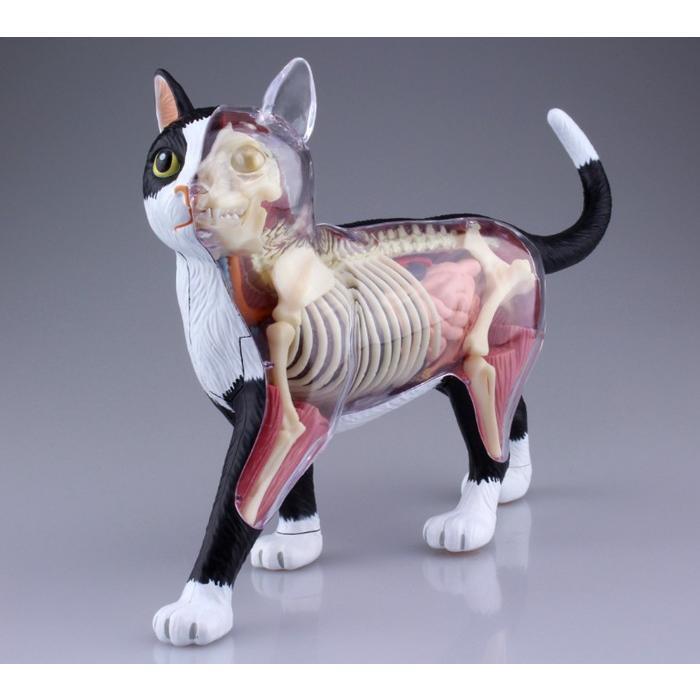 4D VISION 動物解剖 No.29 (猫解剖モデル 黒/白)|kyouzai-j