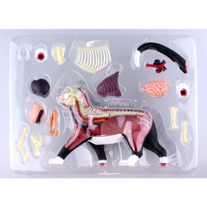 4D VISION 動物解剖 No.29 (猫解剖モデル 黒/白)|kyouzai-j|06