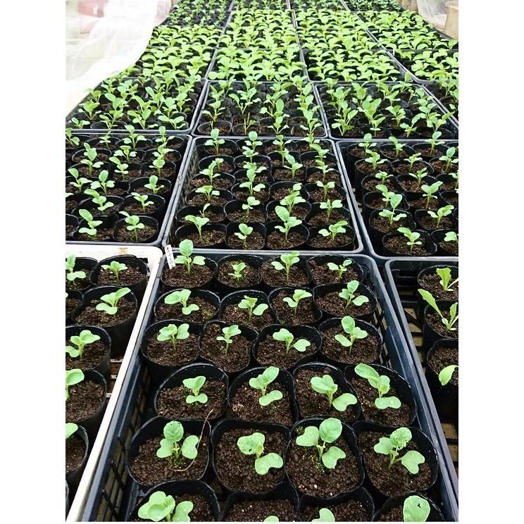 ポット用培土 野菜用 20L|latec643636|02