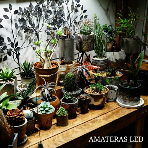 植物育成灯 アクアリウム テラリウム パルダリウム 太陽光LED 水草育成 観葉植物 BARREL AMATERAS(アマテラス) LED 20W BARREL leafs 15