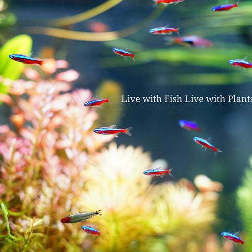 植物育成灯 アクアリウム テラリウム パルダリウム 太陽光LED 水草育成 観葉植物 BARREL AMATERAS(アマテラス) LED 20W BARREL leafs 16