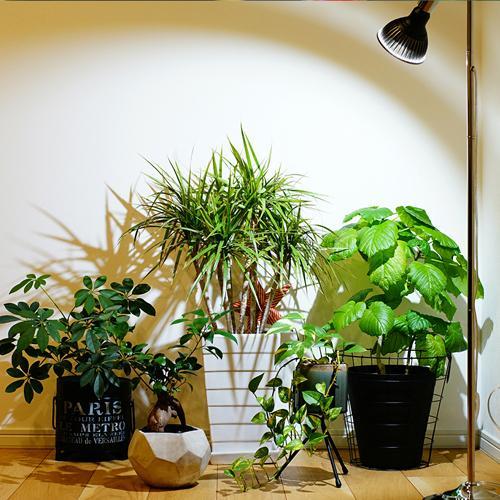 植物育成灯 アクアリウム テラリウム パルダリウム 太陽光LED 水草育成 観葉植物 BARREL AMATERAS(アマテラス) LED 20W BARREL leafs 17