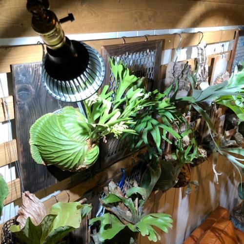 植物育成灯 アクアリウム テラリウム パルダリウム 太陽光LED 水草育成 観葉植物 BARREL AMATERAS(アマテラス) LED 20W BARREL leafs 18