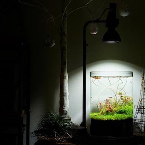 植物育成灯 アクアリウム テラリウム パルダリウム 太陽光LED 水草育成 観葉植物 BARREL AMATERAS(アマテラス) LED 20W BARREL leafs 05