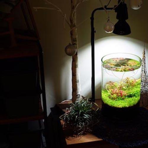 植物育成灯 アクアリウム テラリウム パルダリウム 太陽光LED 水草育成 観葉植物 BARREL AMATERAS(アマテラス) LED 20W BARREL leafs 07