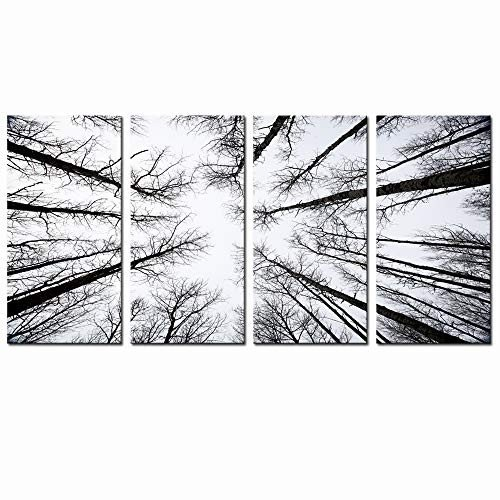 LevvArts - 黒 and 白い Forest Canvas Wall Art Low Low Angle View Aspen