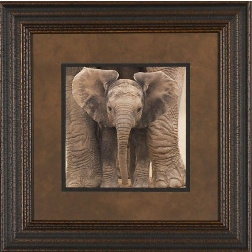 Big Ears by Andy Rouse 22x22 Gallery Quality Framed Art Print Photogra