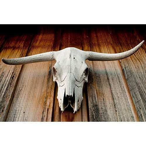 Longhorn Skull (36x54 Giclee Gallery Print, Wall Wall Decor Travel Poster)