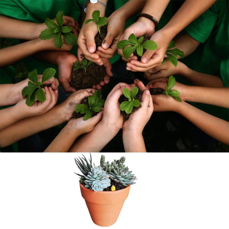 Terracotta Pot Clay Pots Small Clay Clay Clay Ceramic Pottery Planter Cactus Flo 098