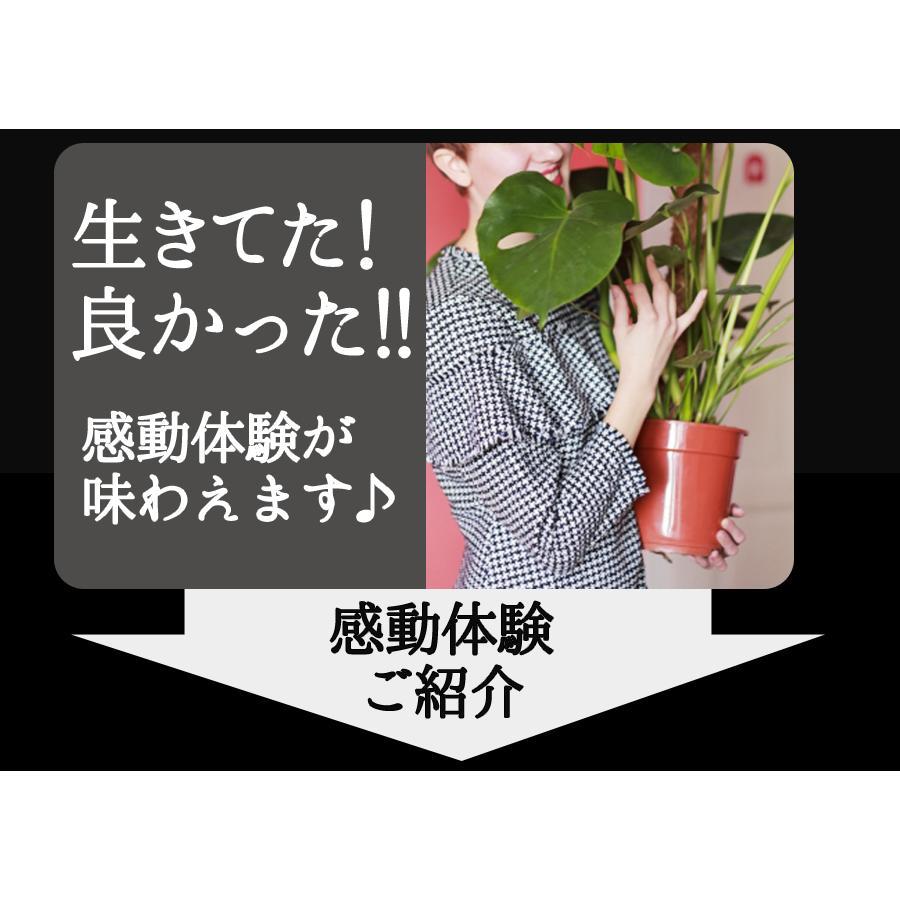 水やり回数半減 水やりヘルパー 500ml 植物用土壌保水剤 保湿材|life-eco|13