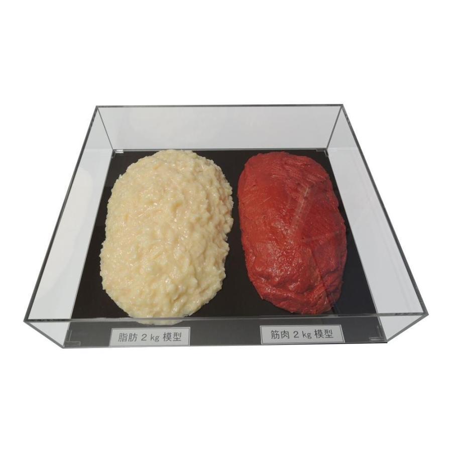 脂肪/筋肉対比セット(アクリルケース入)2kg IP-983 同梱不可