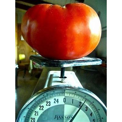 超巨大トマト 卓抜 未使用 種 4粒