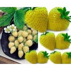 期間限定で特別価格 不思議なイエローイチゴ 贈呈 種 12粒