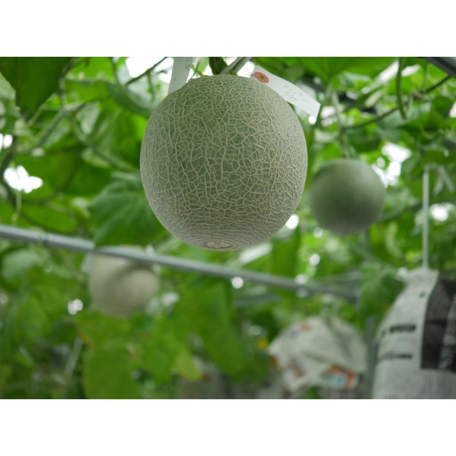 まちだシルクメロン(プラチナ)まちだ新農法で作られたジューシーで濃密な甘さが凝縮した糖度のある高級メロン 年間数個限定のプレミアムメロン|machida-melon|04