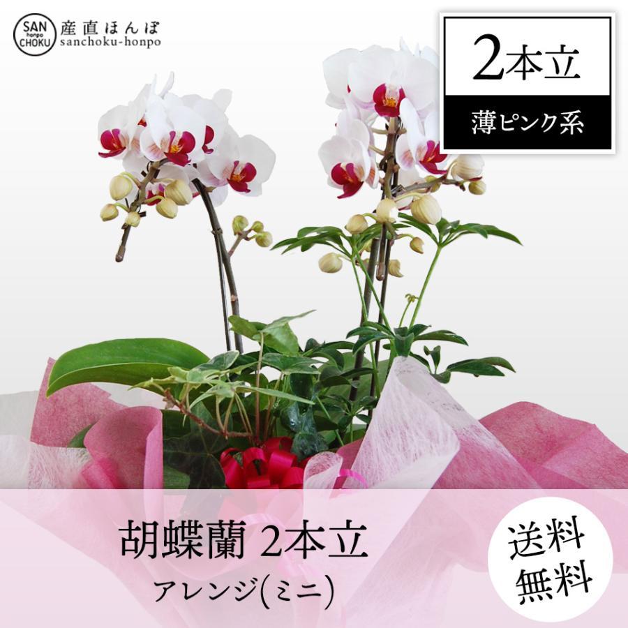 コチョウラン 2本立・アレンジ 薄ピンク系 ミニ