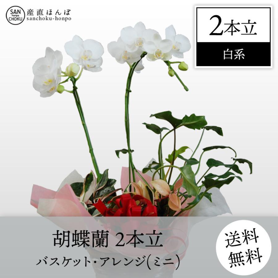 コチョウラン 2本立・パケット・アレンジ 白系 ミニ