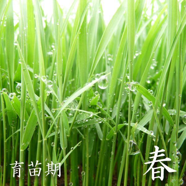 米 24kg 白米 8kg×3袋小分け 令和2年 青森県産 産直米|maeda-rice|03