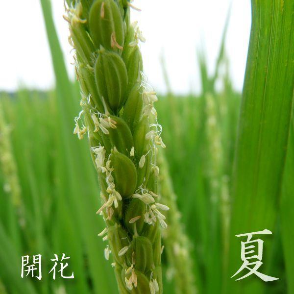 米 24kg 白米 8kg×3袋小分け 令和2年 青森県産 産直米|maeda-rice|04