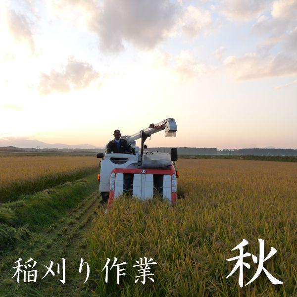 米 24kg 白米 8kg×3袋小分け 令和2年 青森県産 産直米|maeda-rice|05