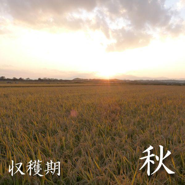 米 24kg 白米 8kg×3袋小分け 令和2年 青森県産 ふるさとのお米|maeda-rice|05