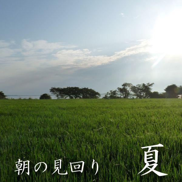 お試し用 精白米 500グラム 青森マエダライスが贈る 産直米 商品代引き不可、メール便配送品 maeda-rice 03