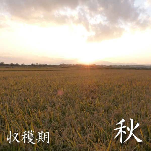 お試し用 精白米 500グラム 青森マエダライスが贈る 産直米 商品代引き不可、メール便配送品 maeda-rice 04