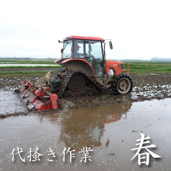 米 20kg 玄米 10kg×2袋小分け 令和2年 青森県産 ふるさとのお米|maeda-rice|03