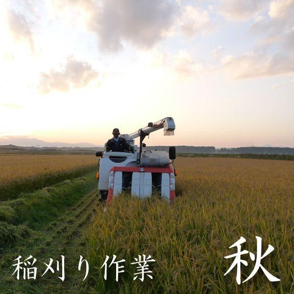 米 20kg 玄米 10kg×2袋小分け 令和2年 青森県産 ふるさとのお米|maeda-rice|05