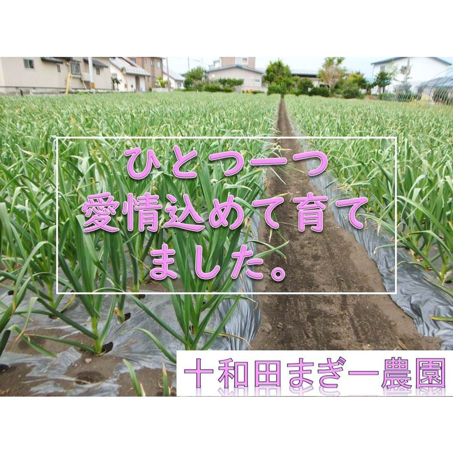 野菜ソムリエの甘い黒にんにく 送料無料 500g 波動熟成 (完売しました。)  maggysfarm-towada 07