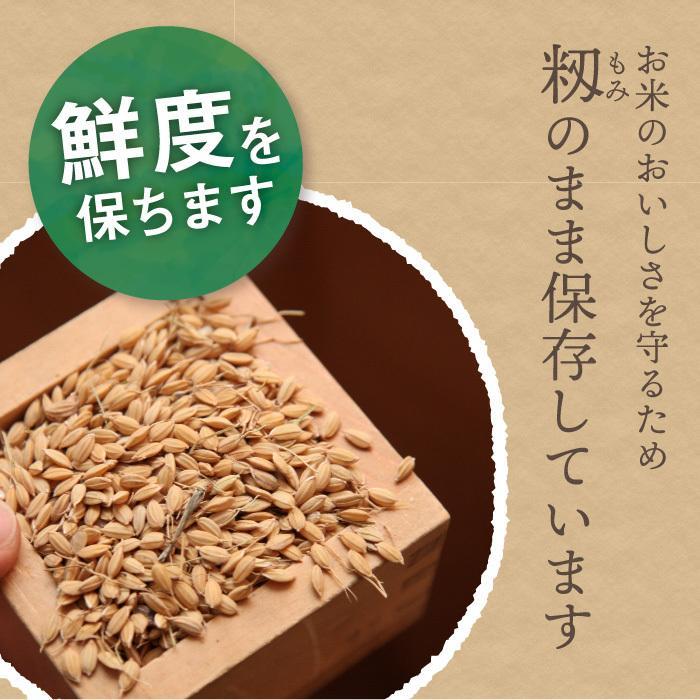 新之助 玄米 5kg  しんのすけ 新潟県産 お米 げんまい|magosaku-food|06