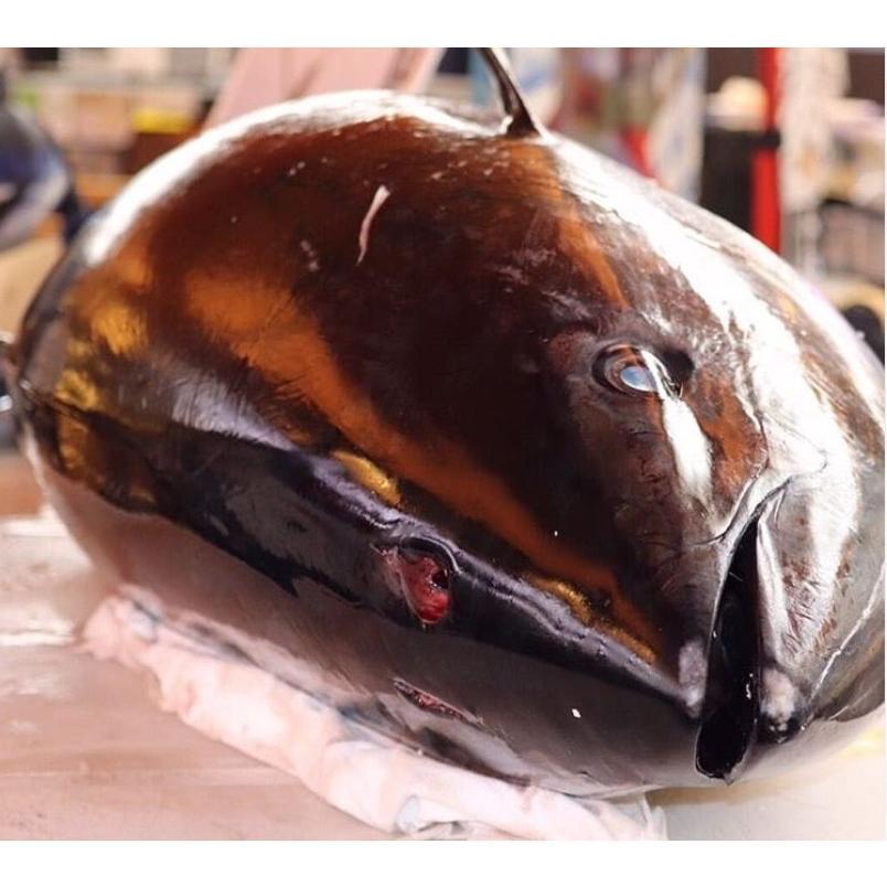 まぐろ マグロ 鮪 本マグロ 赤身 ブロック 柵 刺身 海鮮 グルメ ギフト 本マグロ赤身300g 「解凍レシピつき」 2〜3人前|maguro441|10