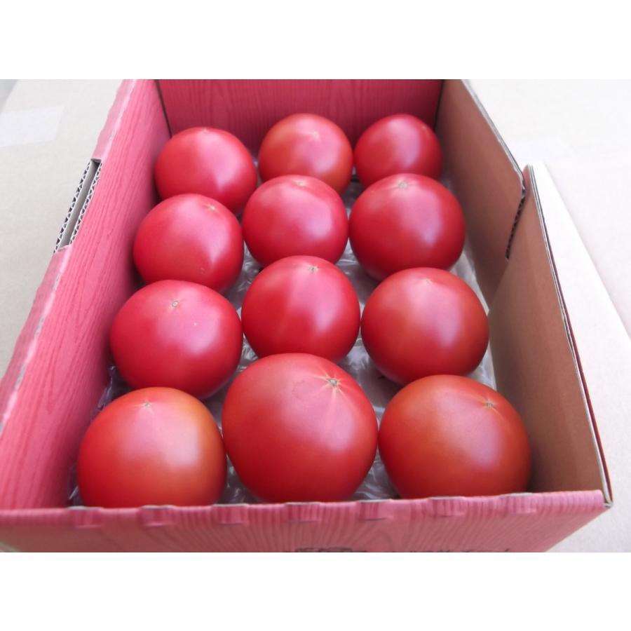 渥美産 ぜいたくトマト 「とまとのこころ」 1kg|mak