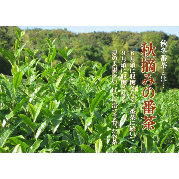 お茶 番茶 秋冬番茶 牧之原産 500g くせのないスッキリとした味わい 水出しでポリサッカライド 血糖値が気になる方に 静岡茶 makinoharacha 02