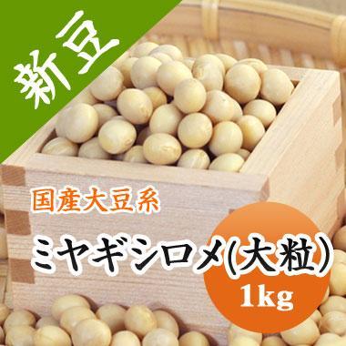 ミヤギシロメ大豆 宮城県産 大粒 令和1年産 1kg