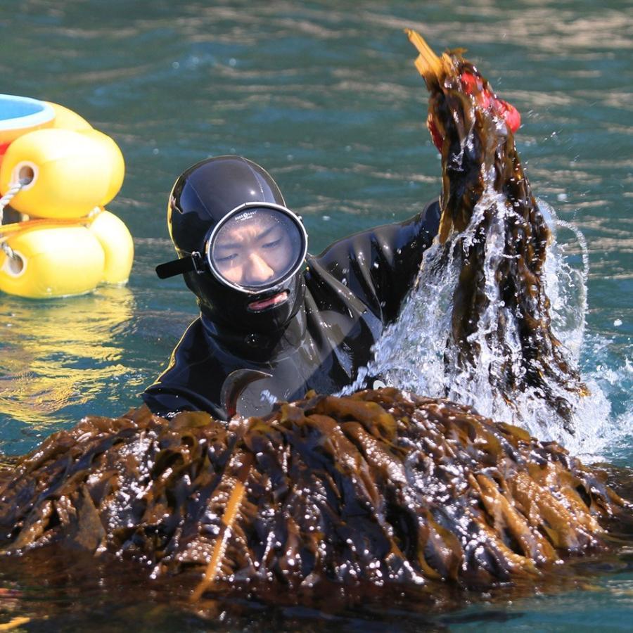 糸島の乾物 海藻 いとしま くきわかめ 細切り【山下商店】|manpuku-kyusyu|04