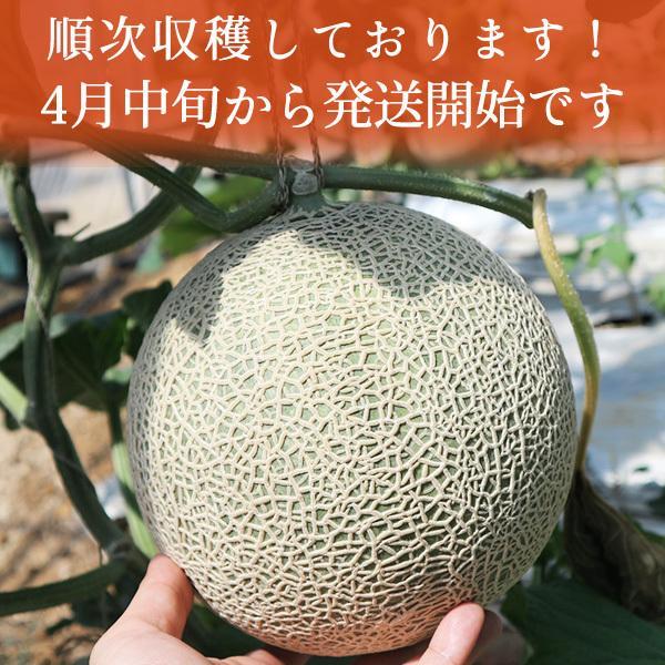 宮古島産 春 メロン 赤肉クインシーメロン2玉  3L 超大玉(1.7kg〜2.0kg)|mantenmiyakojima|02