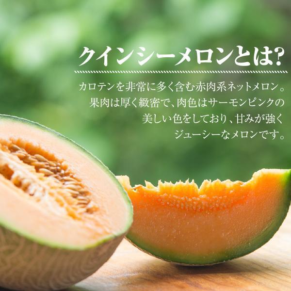 宮古島産 春 メロン 赤肉クインシーメロン2玉  3L 超大玉(1.7kg〜2.0kg)|mantenmiyakojima|04