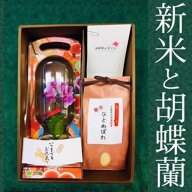 『新米と胡蝶蘭』 花鉢