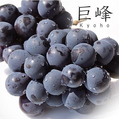 種無し巨峰 4パック入り 葡萄 ぶどう 秀品 九州産|maruichi-kudamono