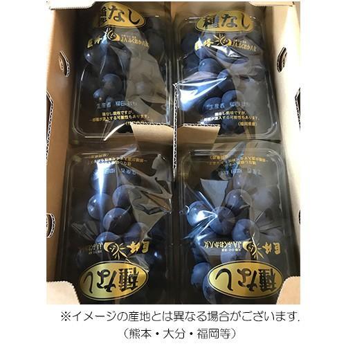 種無し巨峰 4パック入り 葡萄 ぶどう 秀品 九州産|maruichi-kudamono|02