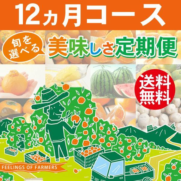 旬を選べる美味しさ定期便 12ヵ月コース 愛媛県·宇和島産 みかん柑橘&野菜 送料無料※一部地域を除く