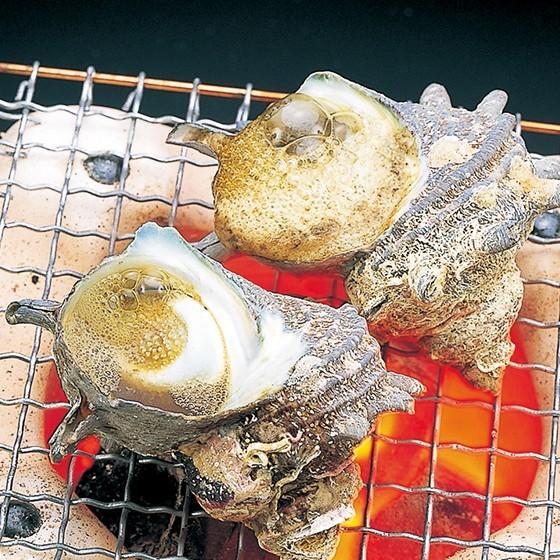 活えぞあわび養殖(韓国産)活ざざえ各3個入〔海水入酸素入]〔送料無料〕9種類のカラーレシピ&保存方法付なのでご家庭で料理できます それに100%活きたまま|marukatsu-onjuku11|06