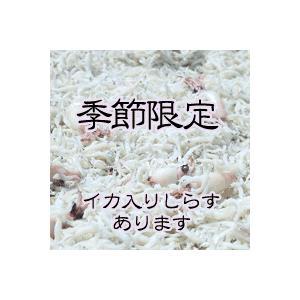 季節限定 イカ入りしらす 1kg (250g×4パック) marutomokaisan 02