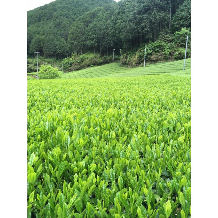 農家直売 やぶきた一番茶100% 静岡本山茶 うちまき育ち 200g|maruuchi|03