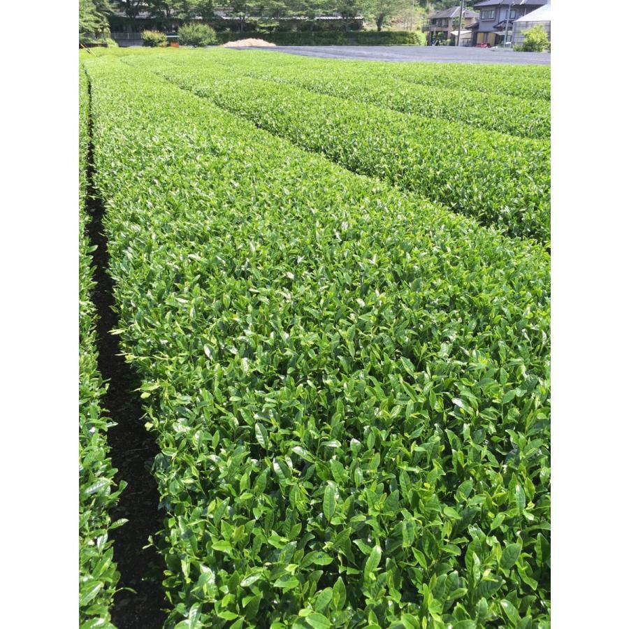 農家直売 やぶきた一番茶100% 静岡本山茶 うちまき育ち 200g|maruuchi|04